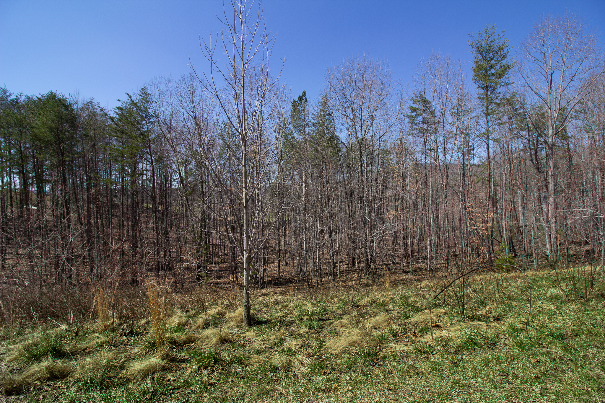 1.3 Acre Homesite in Botetourt County